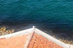 #martı #seagull #deniz #sea #nature #doğa