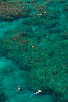 Did you know Key West's coral reef is the largest in North America and the third largest in the world behind Belize and the Great Barrier Reef in Australia? Snorkel it aboard a Fury Water Adventures trip! #FuryKeyWest