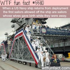 US navy - WTF fun facts