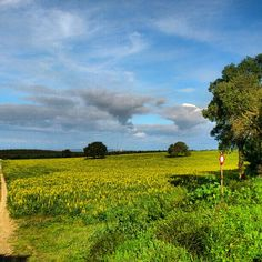 Alentejo Coast,Portugal Countryside, Vineyard, Golf Courses, Portugal, To Go, Coast, Country Roads, Places, Photography