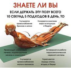 Reflexology, Pilates, Health And Beauty, Anatomy, Healthy Living, Meditation, Health Fitness, Yoga, Workout