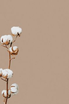Download free image of Beige minimal flower background design space by Sasi about cotton flower, nature wallpaper, fall, cotton, and wallpapers flower 2453543