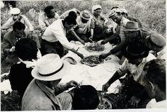 Le tradizioni contadine: vendemmia e raccolta delle olive     #TuscanyAgriturismoGiratola