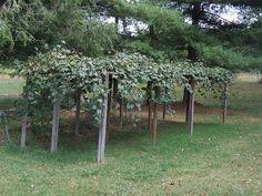 How to Build A Grape Arbor | eHow.com