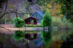 Hidden Colors in the Woods