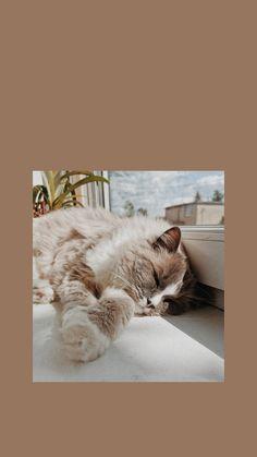 Aesthetic and Vsco cat wallpaper