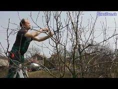 Jak správně ostříhat ovocný strom - YouTube Flora, Gardening, Youtube, Ideas, Garten, Lawn And Garden, Thoughts, Youtube Movies, Horticulture