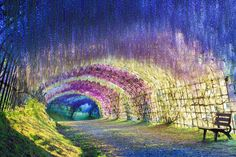 Kawachi Fuji {Wisteria} Gardens Japan { } Wisteria Tunnel is one of the most striking sights of Japan and definitely one of the most beautiful places on Earth. If you go into the tunnel, you won't stop half way, and will definitely want to go to the end!
