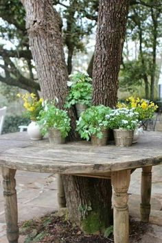 A great idea .. cut a table in half then cut two measured semi circles, ensuring adequate gaps for growth and movement, before putting the table back together around the tree.