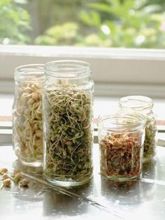 Grow your own sprouts with this tutorial.