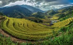 Download wallpapers Bali, rice fields, mountains, Asia