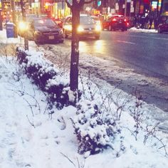 On my way #morning #snow #Toronto #blog #Blogger #Blogging #Blogzest #blogueira #BlogueiraSA #VidaDeBlogueira