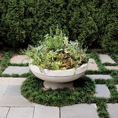 Edible Garden - Spectacular Container Gardening Ideas - Southern Living - Surrounded by a skirt of dwarf mondo grass, this ornate planter filled with an assortment of herbs provides a striking focal point in the middle of the diverging walks. Dwarf Mondo Grass, Container Herb Garden, Herb Gardening, Urban Gardening, Indoor Gardening, Herb Garden Design, Garden Ideas, Garden Tips, Fall Containers