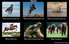 "What horse REALLY do ;) Although I think the ""what my owners think I do"" is pretty darn true, also."