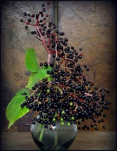 It's high elderberry season in and around Berlin! To be honest: I have never ever seen those tiny black globules for sale, neither in supermarkets, nor on the market or even in organic shops. Elderberry Season, Fruit Photography, Fresh Mint Leaves, Hollyhock, Plant Needs, Medicinal Herbs, Petunias, Flower Beds, Farm Life