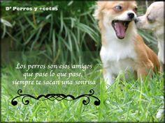 Los mejores amigos #perros #frases