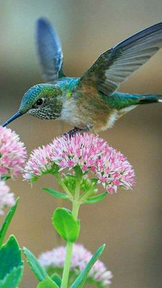 Beautiful teal hummingbird!