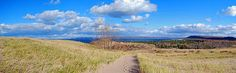 Dune Path To Glen Arbor by Twenty Two North Photography - Dune Path To Glen Arbor Photograph - Dune Path To Glen Arbor Fine Art Prints and Posters for Sale