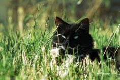 A field cat