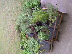 My herb garden.