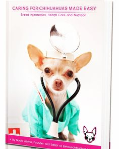 CHIHUAHUA BOOK BEST SELLER: Caring For Chihuahuas Made Easy: Breed Information, Health Care and Nutrition. BUY NOW at http://www.famouschihuahua.com/book/