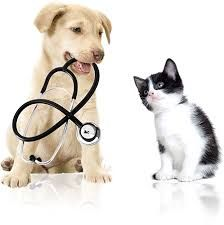 Healthy Pets In 2020 Dog Clinic Pet Clinic Dog Cat