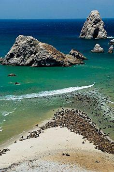 Paracas, Peru. An amazing place. Spectacular wildlife, seawolfs /  Paracas, lobos marinos
