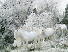 Unicorns In Winter