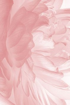 Pink wallpaper, screen wallpaper, iphone wallpaper, aesthetic wallpapers, e Wallpaper Free, New Wallpaper Iphone, Summer Wallpaper, Trendy Wallpaper, Iphone Wallpapers, Screen Wallpaper, Beautiful Wallpaper, Pink Flower Wallpaper, Tumblr Photography