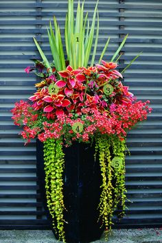 Set Off a Blast of Color is part of Container gardening flowers - Basing this planter's design on so many red plants makes an impressive impact The diverse shapes let each red plant hold its own, while creeping Jenny and 'Lineatum' New Zealand […] Outdoor Flowers, Outdoor Plants, Outdoor Spaces, Potted Plants Patio, Outdoor Pots And Planters, Potted Plants Full Sun, Outside Planters, Tall Planters, Outdoor Decor