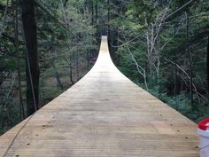Walking along this treetop path in western MA will give you butterflies in the best way possible!
