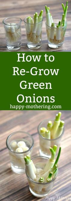 Have you been wondering how to re-grow green onions? It's surprisingly simple, and it makes a great gardening lesson for the kids too!