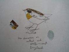 whinchat | by pennyleavergreen