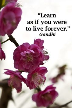 """""""Learn as if you were to live forever."""" Gandhi – Explore learning and education through tips, articles, quotes, and news at http://www.examiner.com/education-in-national/florence-and-joseph-mcginn"""