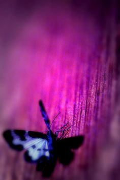 Magenta wood with butterfly, http://yourweightlossexperts.com/