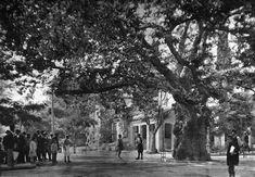 Πώς ήταν η Κέρκυρα στα 20s; Ο ισθμός της Κορίνθου τον περασμένο αιώνα; Πώς έμοιαζε το ξενοδοχείο Χίλτον όταν είχε ακόμα… σκαλωσιές; Το Ναύπλιο του '50; Κάνουμε ένα φωτογραφικό ταξίδι στο παρελθόν μέσα από 20 υπέροχες φωτογραφίες της Ελλάδας του τότε. Οικογένεια ιερωμένου στο Ζεμενό Κορινθίας το 1903. Φωτό: Frederic Boissonnas Το Γεφύρι της Άρτας […]