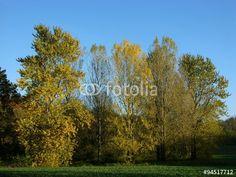 Herbstlandschaft mit grünem Feld am Menkhauser Weg in Oerlinghausen im Teutoburger Wald