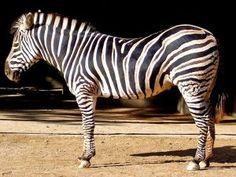 zoo animals 23