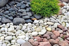 25 Beautiful Backyard Landscaping Ideas Adding Beach Stones to Modern Backyard Designs (modern back yard) Home Landscaping, Landscaping With Rocks, Beach Landscape, Landscape Design, Modern Backyard Design, Backyard Designs, Backyard Ideas, Stone Backyard, Seaside Garden