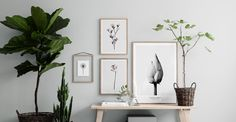 botanisch-posters
