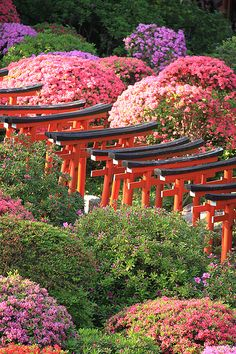 from the floating world Places Around The World, Oh The Places You'll Go, Places To Visit, Around The Worlds, Beautiful Places, Beautiful Pictures, Torii Gate, Japanese Landscape, City Scene