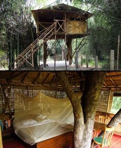 Treehouse Hotel in India.  Eco-friendly jungle getaway located in the heart of Mudumalai Wildlife Sanctuary. Get ready for wonderful and amazing experiences.