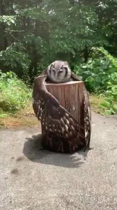 Cute Little Animals, Cute Funny Animals, Funny Owls, Cute Animal Videos, Funny Animal Pictures, Nature Animals, Animals And Pets, Wild Animals, Beautiful Birds