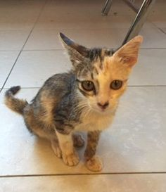 Cats for Adoption, Sale, Lost and Found, All Ages - PetFinder.my