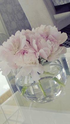 Flowers, peony