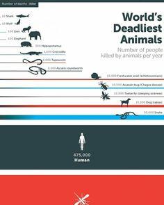 Excelente gráfico que muestra los animales más mortíferos para los humanos! Sorprendente!   Aprende más en scoolmax.com
