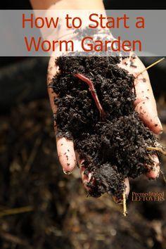 How To Start A Worm Garden