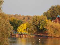 copacul Danube Delta, River, Outdoor, Outdoors, Rivers, The Great Outdoors