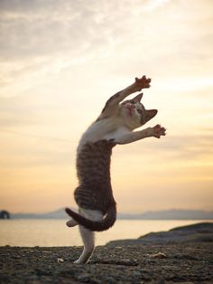 Cats Being Ninjas - The Pawsome Project That Portrays Cats Being Kung Fu Masters Dancing Animals, Dancing Cat, Funny Cats, Funny Animals, Cute Animals, Jumping Cat, Ninja Cats, Cat Reference, Cat Stands