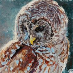 "<p><span>Kelly Singleton</span><br /><span><em>Backlit - Barred Owl,</em> 2011<br /></span><span>Oil</span><br /><span>8"" x 10""<br />Price upon Request<br />©<span>Kelly Singleton</span></span></p>"